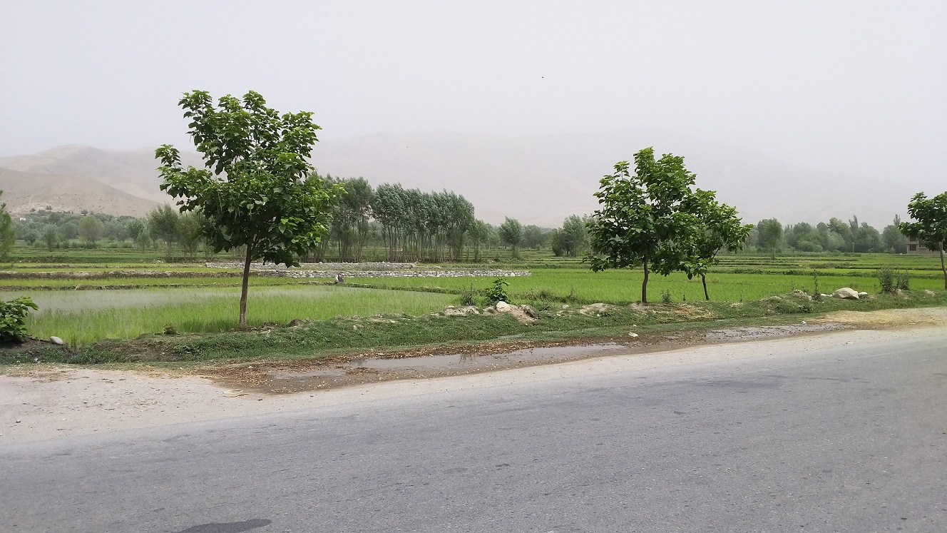 Keshm-district-central-town-asphalt-road-near-to-the-Aisha-masjed (1)
