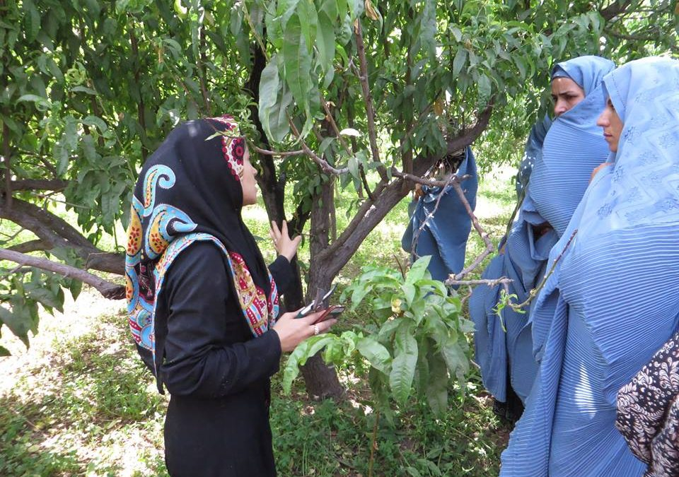 Training Service Provider for Grape, Raisin and Orchard Crops Sectors RADP-W-RFP-2015-0006